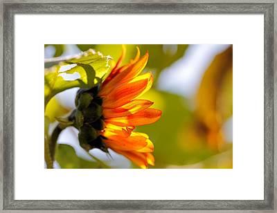 Little Sunshine Framed Print