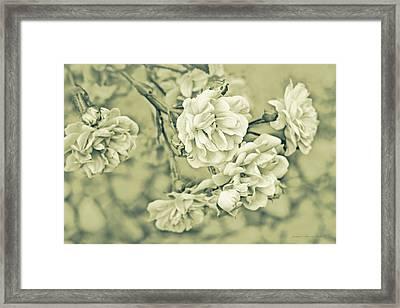 Little Tea Roses Celadon Green Framed Print