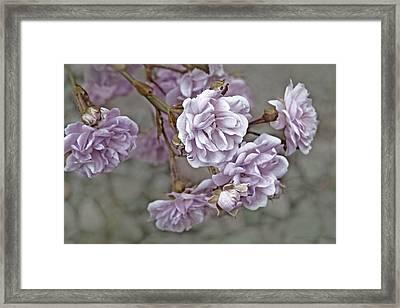 Little Tea Roses Purple Framed Print