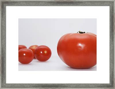 Little Tomatoes And One Big Tomato Framed Print by Marlene Ford