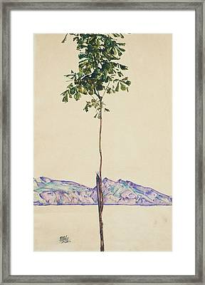 Little Tree Framed Print by Egon Schiele