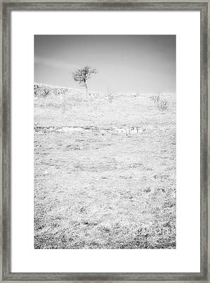 Little Tree On The Hill - Black And White Framed Print by Natalie Kinnear