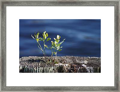 Little Tree Framed Print