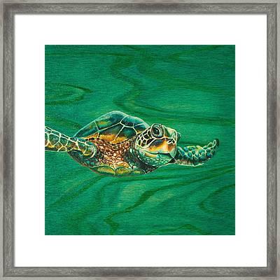 Little Turtle Framed Print