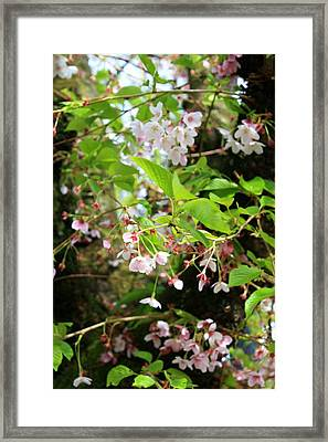 Little White Flowers Framed Print by Cathie Tyler