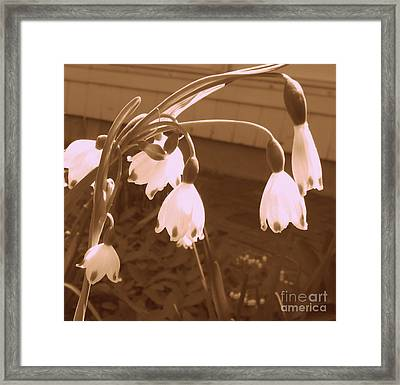 Little White Flowers  Framed Print by Christy Beal