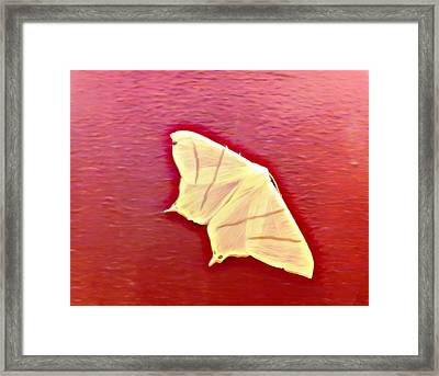 Little White Moth Framed Print by Isabella F Abbie Shores FRSA