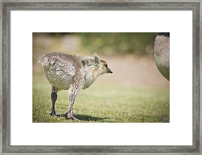 Framed Print featuring the photograph Little Wing by Priya Ghose