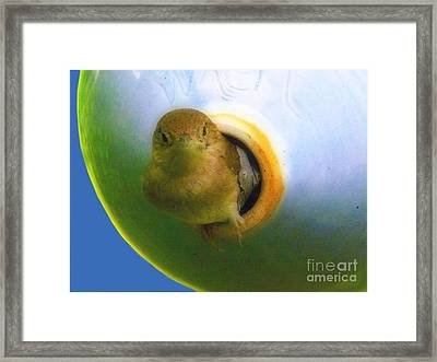 Little Wren Blue Framed Print by Deb Schense