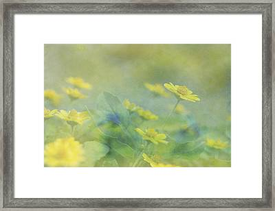 Little Yellow Beauties Framed Print