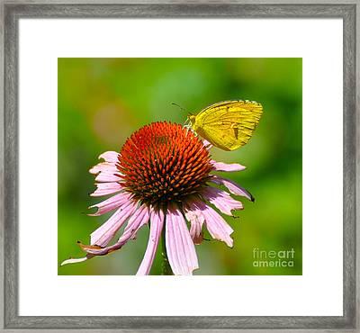 Little Yellow Butterfly Framed Print