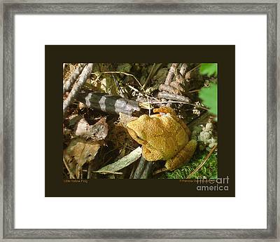 Little Yellow Frog Framed Print
