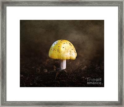 Little Yellow Mushroom Framed Print