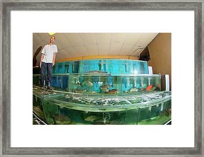 Live Fish Trade Framed Print