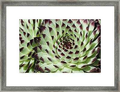 Framed Print featuring the photograph Live-for-ever by Lana Enderle