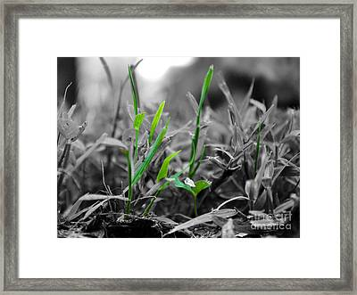 Live Green Framed Print by Jai Johnson