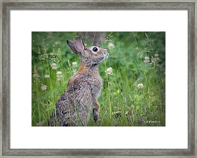 Live In Clover Framed Print by Brian Wallace