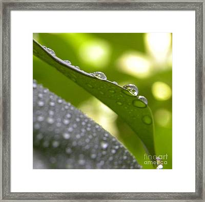 Live Lightly On The Earth2 Framed Print by Laura Yamada