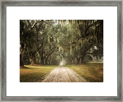 Live Oak Allee' On A Foggy Morn Framed Print by Sandra Anderson