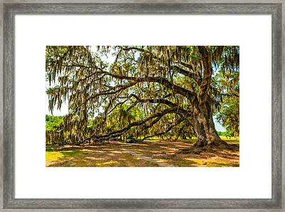 Live Oak II Framed Print by Steve Harrington