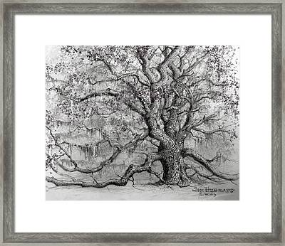 Live Oak Framed Print