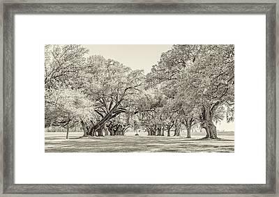 Live Oak Journey High Key Framed Print by Steve Harrington
