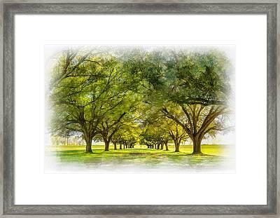 Live Oak Journey Paint Framed Print by Steve Harrington