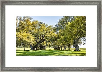 Live Oak Journey Framed Print by Steve Harrington