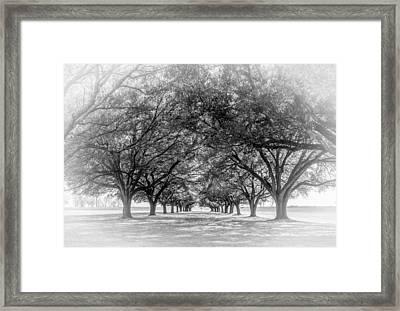 Live Oak Journey Vignette Bw Framed Print by Steve Harrington