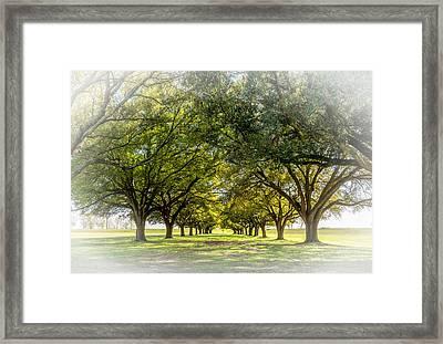 Live Oak Journey Vignette Framed Print by Steve Harrington