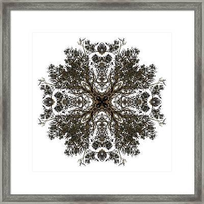 Live Oak Lace Framed Print by Debra and Dave Vanderlaan