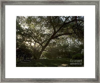 Live Oak Light Streaming Through Fog Framed Print by Kelly Morvant