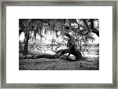 Live Oak Seat Framed Print