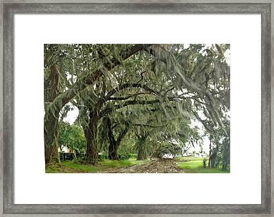 Live Oak Trail Framed Print by Jim Hubbard