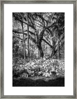 Live Oaks And Azaleas Painted Bw Framed Print by Rich Franco