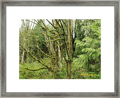 Framed Print featuring the photograph Livid Moss by Sadie Reneau