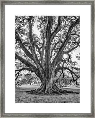 Living Art - Paint Bw Framed Print