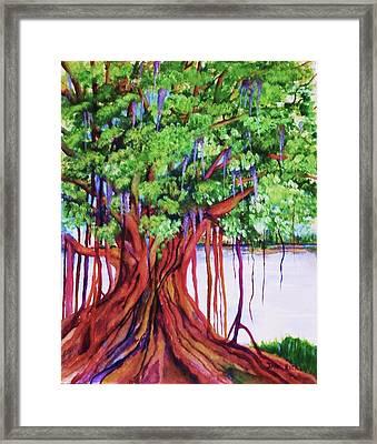 Living Banyan Tree Framed Print