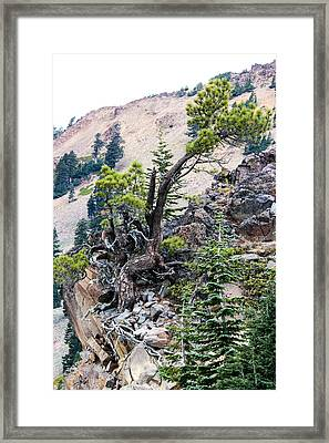 Living Dangerously Framed Print
