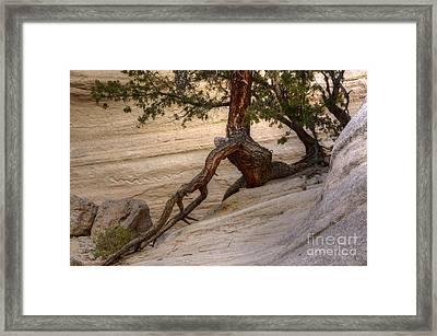Living Gracefully Framed Print by Bob Christopher