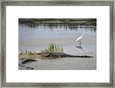 Living In Harmony Framed Print