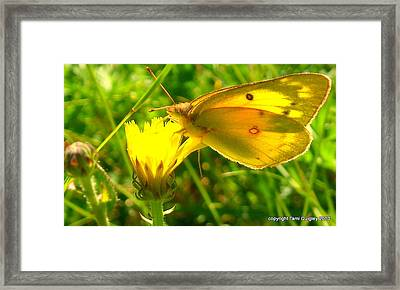 Living In The Light Framed Print