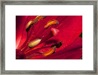 Living Inside A Lily Framed Print