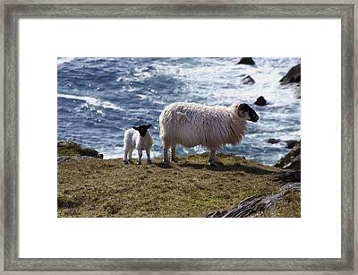 Living On The Edge Framed Print by Bill Cannon