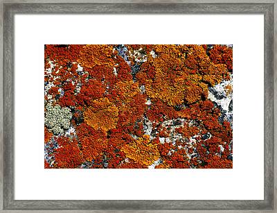 Living Rock  Framed Print by The Forests Edge Photography - Diane Sandoval