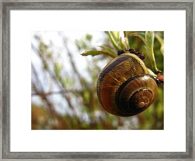 Living Swirls Framed Print by Rhonda Barrett