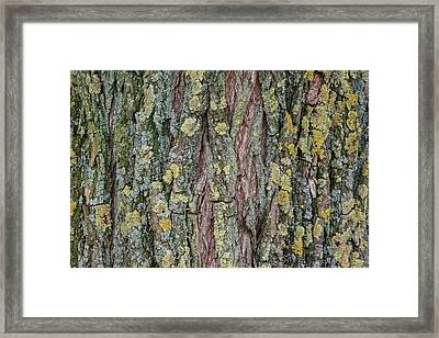 Living Tree Framed Print