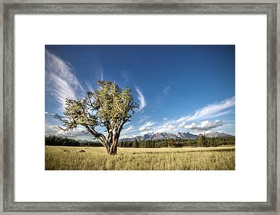 Livingston Range // Glacier National Park Framed Print by Nicholas Parker