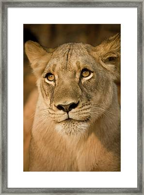 Livingstone, Zambia, Africa Framed Print by Janet Muir