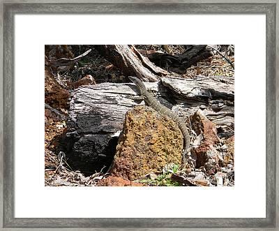 Lizard Framed Print by Adel Nemeth